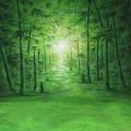 walimex pro Motiv-Stoffhintergrund 'Bamboo', 3x6m Nr. 16473