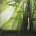 walimex pro Fotomotiv-Hintergrund Glade, 3x6m Nr. 16827